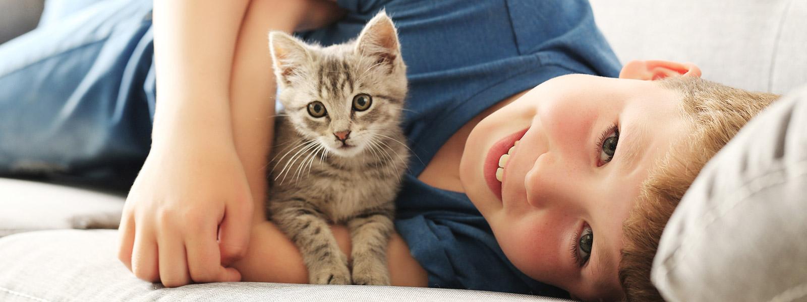Kitten Adoptions Cat Adoptions Vets In Cranbourne