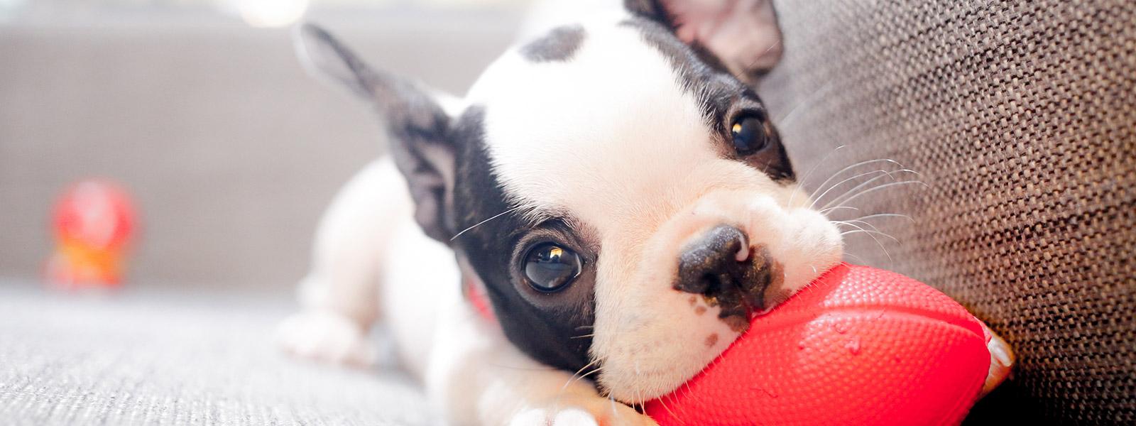 Dog Obedience Training Cranbourne